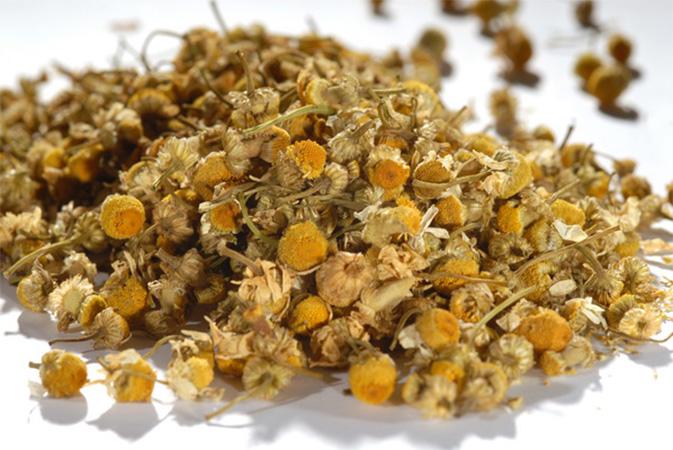 Kamomilla - yrttihauduke - Runda Munken Teekauppa