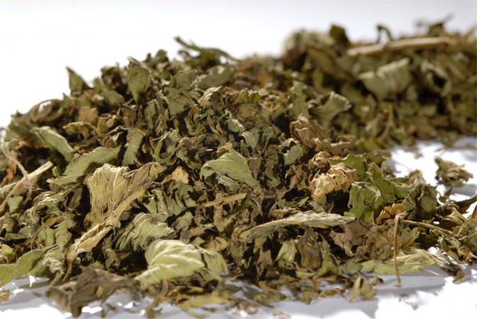 Piparminttu - yrttihauduke - Runda Munken Teekauppa
